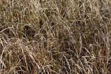 19893825-Full-frame-photo-of-long-withered-grass-Stock-Photo