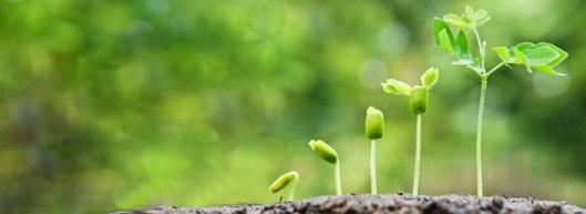 GrowImage_plant
